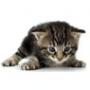 AnimauxSante, assurance pour animaux